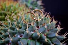 Macro das alianças de casamento ao lado do blure da planta do cacto Fotografia de Stock