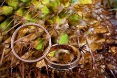 Macro das alianças de casamento ao lado do cacto Foto de Stock Royalty Free