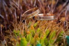 Macro das alianças de casamento na planta do cacto Imagens de Stock Royalty Free
