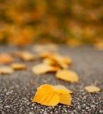 Macro das folhas caídas Foto de Stock Royalty Free