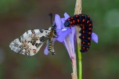 Macro de Caterpillar en naturaleza verde Imágenes de archivo libres de regalías