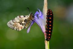 Macro de Caterpillar en naturaleza verde Fotografía de archivo