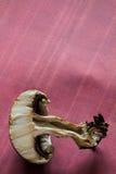 Macro de champignon à l'intérieur de section transversale sur le fond rose avec l'espace de copie Photographie stock