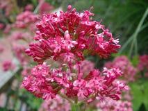 Macro de fleur Image libre de droits