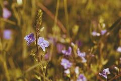 Macro de fleur Photos stock