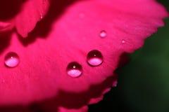 Macro de fleur avec Waterdrops Photographie stock libre de droits