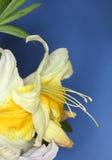 Macro de fleur de ressort Images stock
