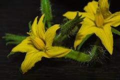 Macro de fleur de tomate avec des détails fleur jaune de tomate images libres de droits