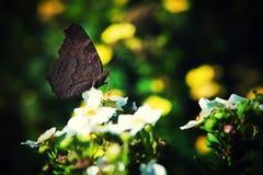 Macro de fond de nature d'été de papillon photos libres de droits