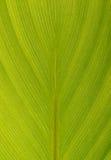 Macro de hoja de palma imagen de archivo