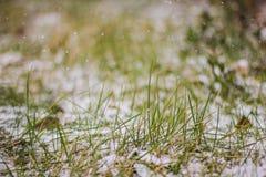 Macro de l'herbe verte fraîche couverte de neige Photographie stock libre de droits