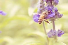 Macro de la abeja con las flores frescas Imagen de archivo libre de regalías