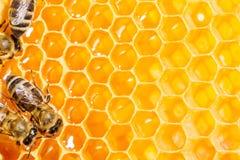 Macro de la abeja de trabajo en honeycells. Foto de archivo