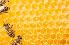 Macro de la abeja de trabajo en honeycells. Imagen de archivo libre de regalías
