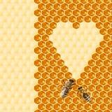Macro de la abeja de trabajo en honeycells Fotos de archivo libres de regalías