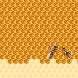 Macro de la abeja de trabajo en honeycells Fotografía de archivo