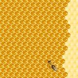 Macro de la abeja de trabajo en honeycells Fotos de archivo