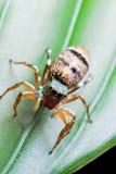 Macro de la araña Foto de archivo libre de regalías