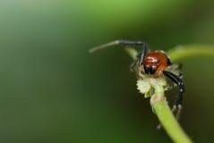 Macro de la araña Foto de archivo