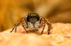 Macro de la araña en naturaleza amarilla Imagen de archivo