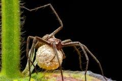Macro de la araña en naturaleza verde Fotografía de archivo libre de regalías