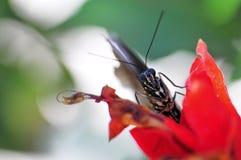 Macro de la cara de la mariposa Fotografía de archivo libre de regalías