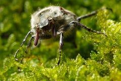 Macro de la cara del insecto Fotos de archivo