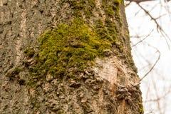 Macro de la corteza de árbol fotos de archivo