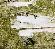 Macro de la corteza de árbol con un espacio raspado Imagen de archivo libre de regalías