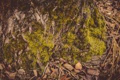 Macro de la corteza de árbol retra foto de archivo libre de regalías