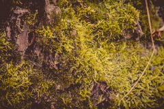 Macro de la corteza de árbol retra imagen de archivo