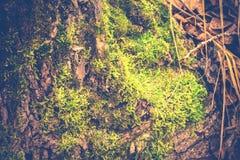 Macro de la corteza de árbol retra fotografía de archivo