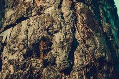 Macro de la corteza de árbol retra fotografía de archivo libre de regalías