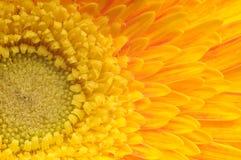 Macro de la flor Fotografía de archivo