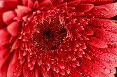Macro de la flor Fotos de archivo libres de regalías
