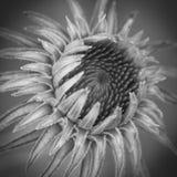 Macro de la flor Imágenes de archivo libres de regalías