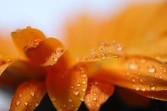 Macro de la flor con gotas del agua Imagen de archivo