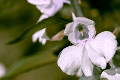Macro de la flor de la orquídea Imagenes de archivo