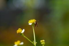 Macro de la flor y de la mariposa Imágenes de archivo libres de regalías