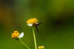 Macro de la flor y de la mariposa Foto de archivo libre de regalías