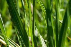 Macro de la hierba Imagen de archivo