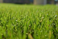 Macro de la hierba Fotos de archivo