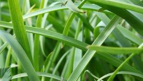 Macro de la hierba verde almacen de video