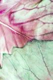 Macro de la hoja de la col roja.   Fotos de archivo libres de regalías