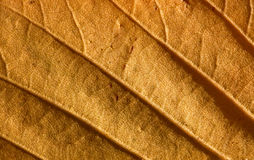 Macro de la hoja del otoño Fotografía de archivo