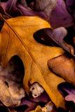 Macro de la hoja del otoño Imagen de archivo