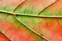 Macro de la hoja del otoño Foto de archivo libre de regalías