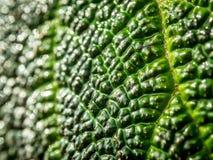 Macro de la hoja verde como fondo Imagen de archivo