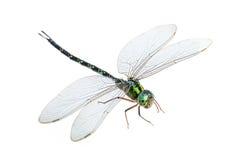 Macro de la libélula aislada Fotografía de archivo