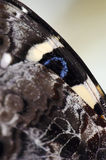 Macro de la mariposa foto de archivo